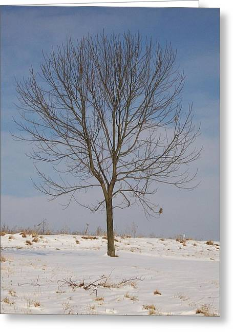 Greeting Card featuring the photograph Standing Tall by Sara  Raber