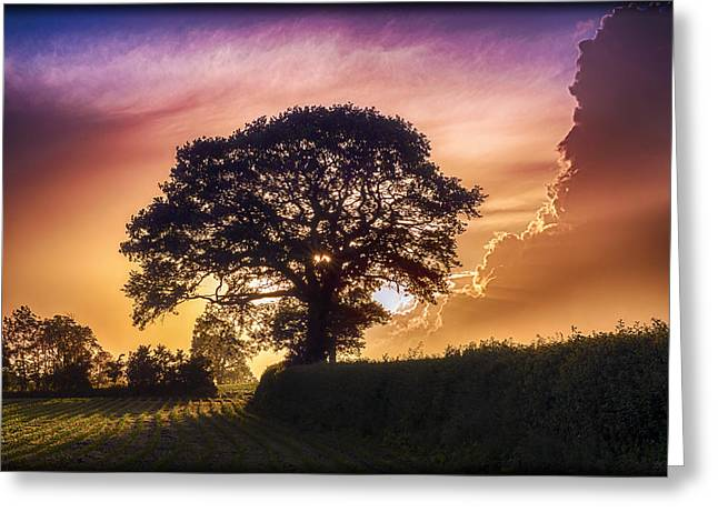 Standing Tall Greeting Card by William Hole