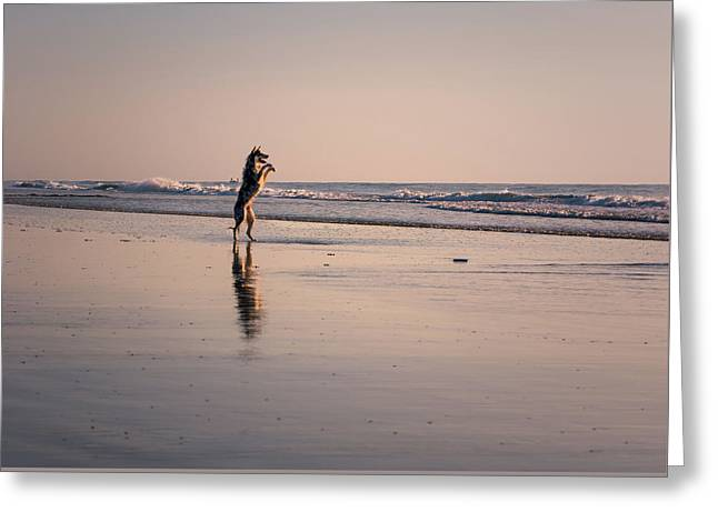 Standing Up On The Beach Greeting Card by Zina Stromberg