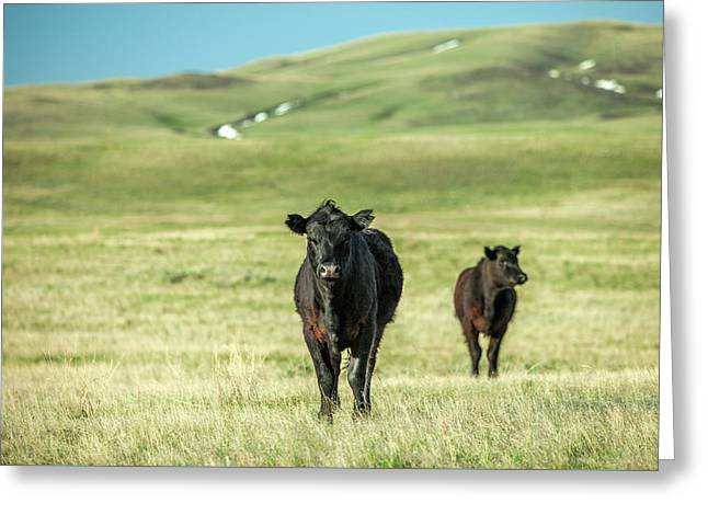 Standoff Greeting Card by Todd Klassy