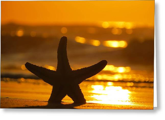 Greeting Card featuring the photograph Star Bokeh by Nikki McInnes
