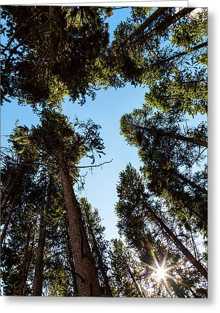 Star Of The Pine Tree Forest Greeting Card
