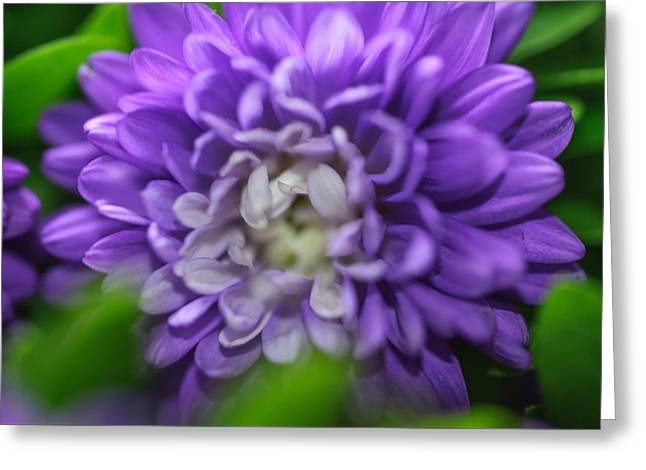 Star Shaped Purple Aster Greeting Card by Jenny Rainbow