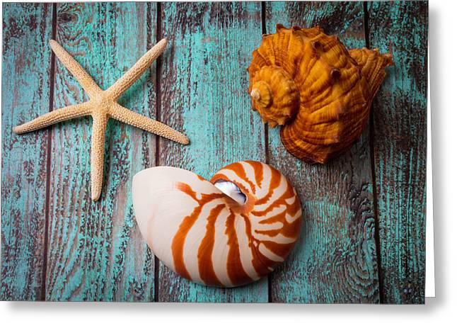 Star Shell Still Life Greeting Card