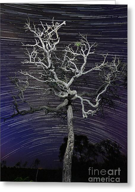 Star Trails In The Cerrado Greeting Card
