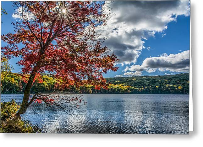Starburst Tree @ Silvermine Lake Greeting Card by Angelo Marcialis