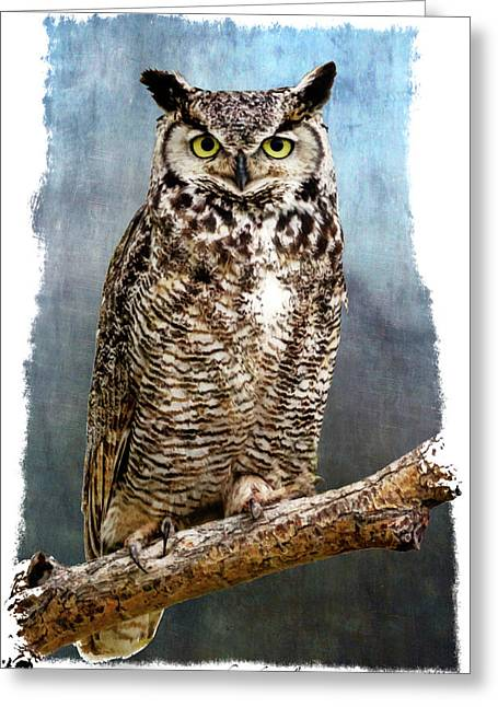 Stare Down Greeting Card by John Williams
