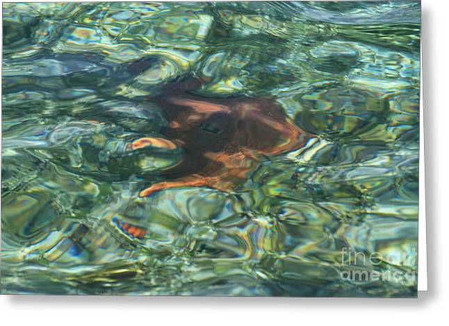 Greeting Card featuring the photograph Starfish Abstract by Edward R Wisell