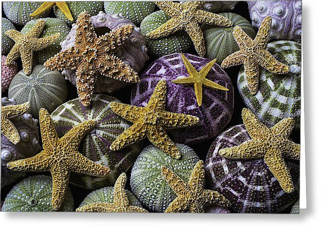 Starfish And Sea Urchins Greeting Card by Garry Gay