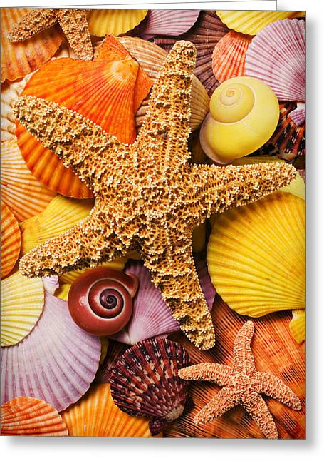 Sea Life Photographs Greeting Cards - Starfish and seashells  Greeting Card by Garry Gay