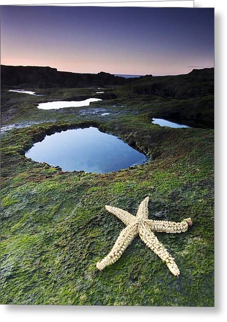 Starfish Greeting Card by Andre Goncalves