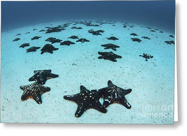 Starfish Cover The Sandy Seafloor Greeting Card