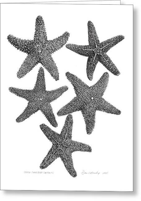 Starfish Drawing Greeting Card