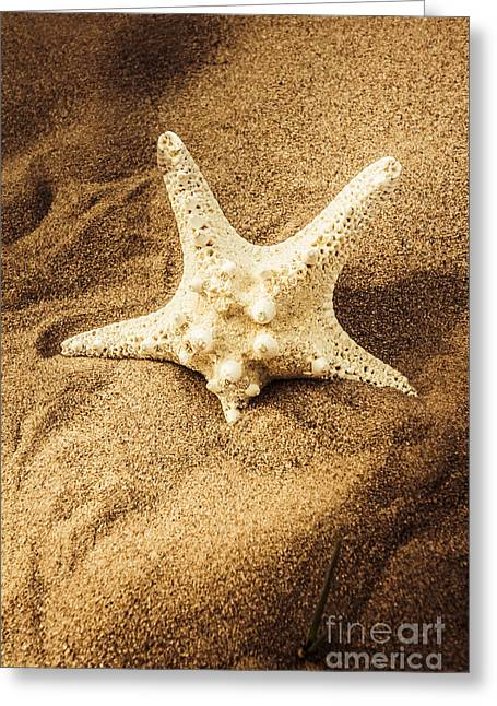 Starfish In Sand Greeting Card by Jorgo Photography - Wall Art Gallery