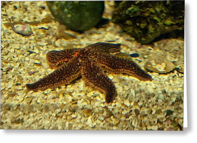 Starfish In The Gravel Greeting Card by Chris Flees