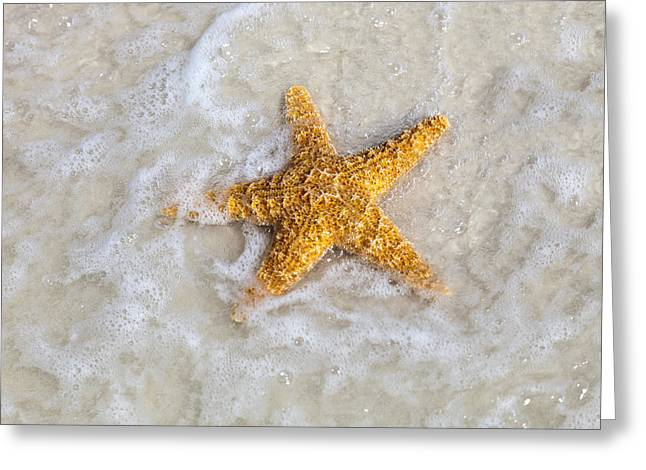 Starfish Greeting Card by Janet Fikar