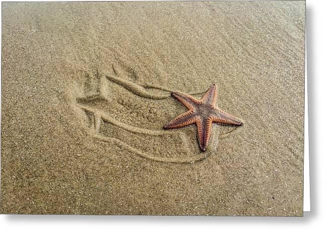 Starfish On The Beach Greeting Card by Debra Martz