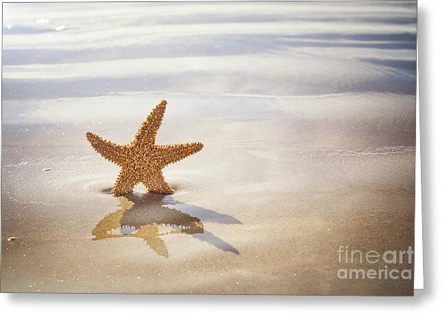 Starfish On The Beach Greeting Card