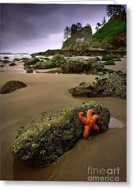 Starfish On The Rocks Greeting Card