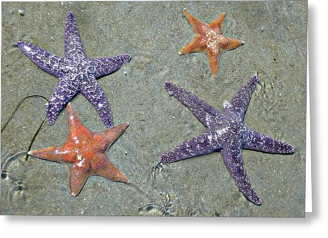 Greeting Card featuring the photograph Starfish Party by 'REA' Gallery
