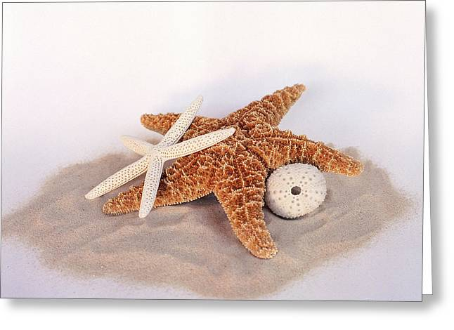Starfish Still Life Greeting Card