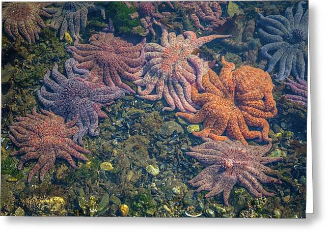 Starfish Greeting Card by Wild Montana Images