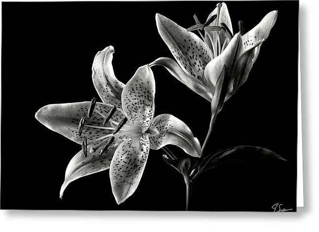 Stargazer Lily In Black And White Greeting Card by Endre Balogh