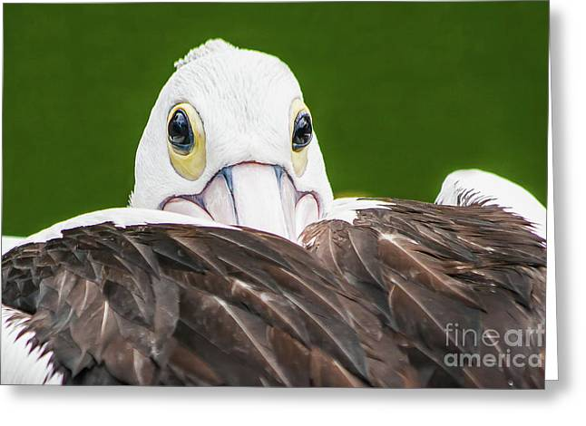Staring Pelican Greeting Card