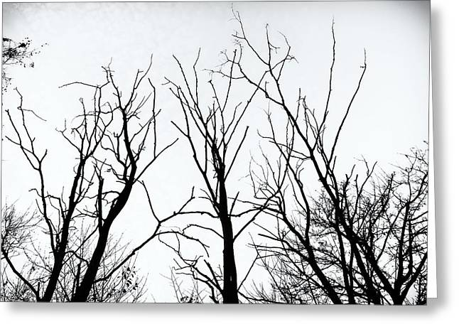 Stark Silhouettes Greeting Card