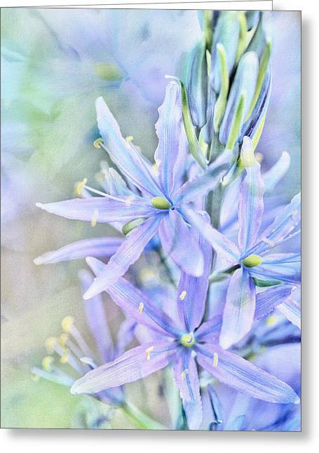 Starlight In The Meadow Greeting Card