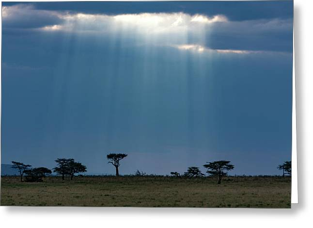 Starlight On The Masai Mara Greeting Card by Aidan Moran