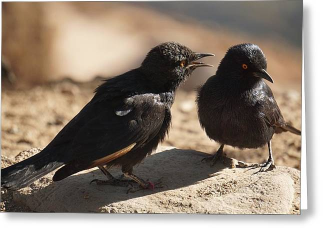 Starling Discussion. Greeting Card