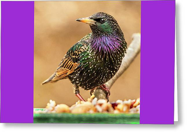 Starling In Glorious Color Greeting Card