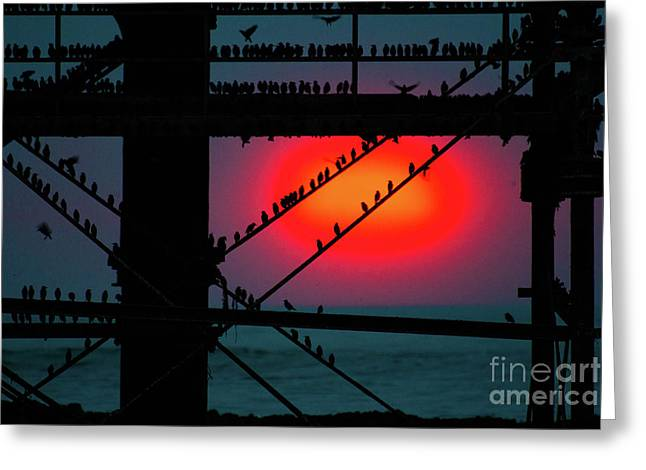 Starlings Against The Setting Sun Greeting Card