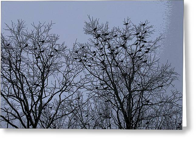 Starlings Greeting Card