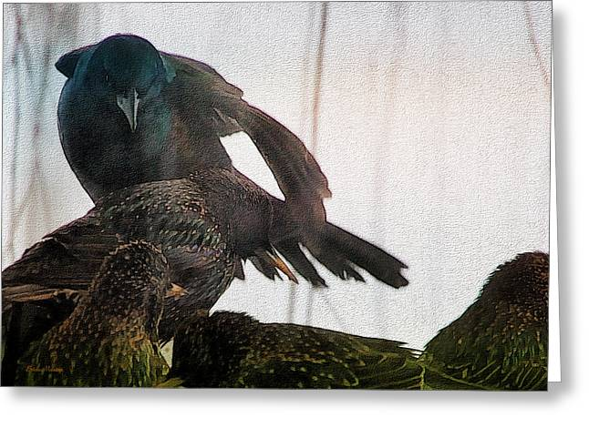 Starlings And The Grackle Greeting Card by Ericamaxine Price
