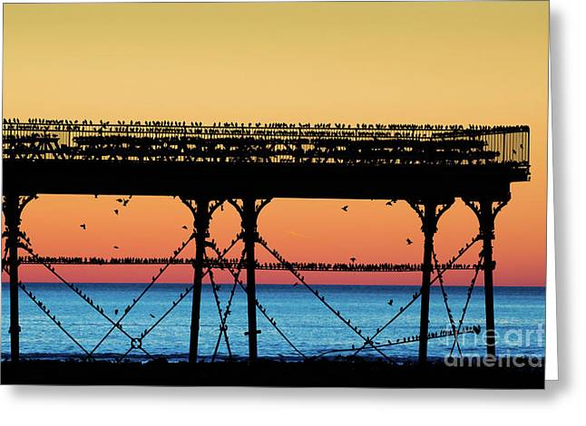 Starlings At Sunset In Aberystwyth Greeting Card