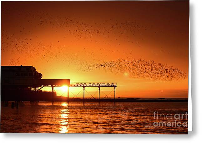 Starlings At Sunset Over Aberystwyth Pier Greeting Card