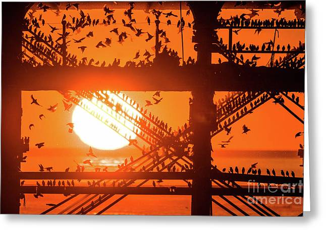 Starlings At Sunset Under Aberystwyth Pier Greeting Card