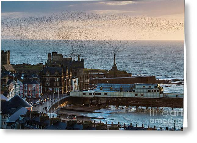 Starlings Over Aberystwyth On The West Wales Coast Greeting Card