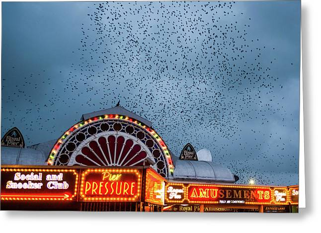 Starlings Over The Neon Lights Of Aberystwyth Pier Greeting Card