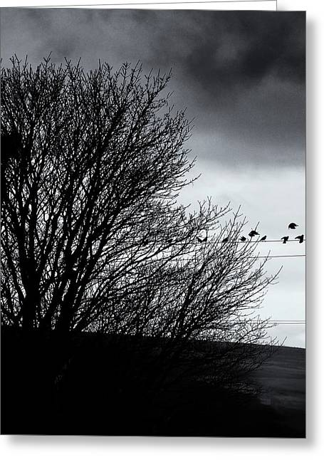 Starlings Roost Greeting Card by Philip Openshaw