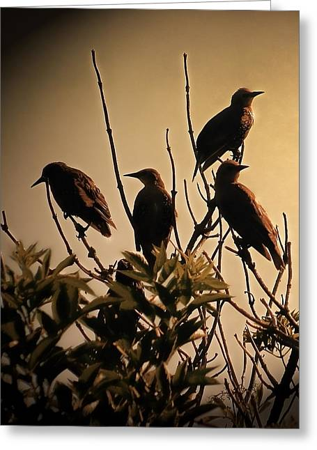 Starlings Greeting Card by Sharon Lisa Clarke