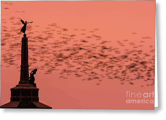 Starlings Sweeping Past Aberystwyth War Memorial Greeting Card