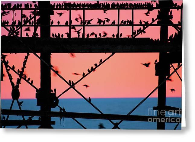 Starlings Under Aberystwyth Pier Greeting Card