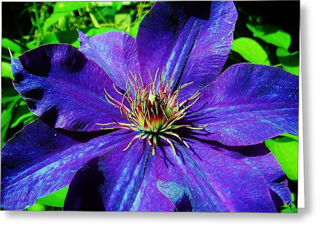 Greeting Card featuring the photograph Starry Bloom by Susan Carella