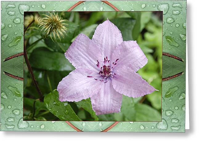 Greeting Card featuring the photograph Starry Mauve by Bell And Todd