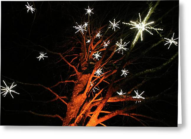 Stars In The Tree Greeting Card