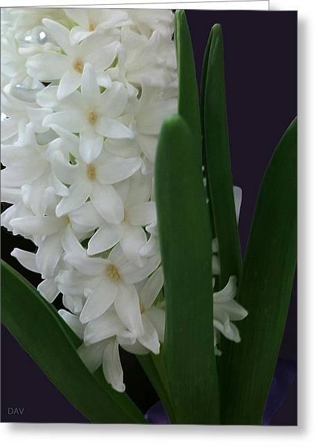 Stars Of Spring Greeting Card by Debra     Vatalaro