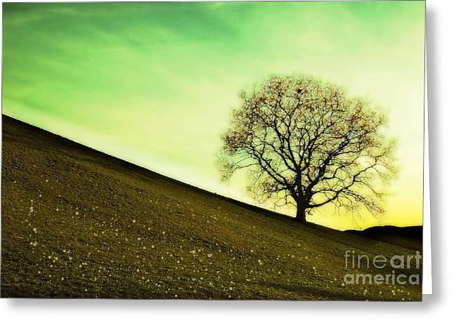 Starting Springtime Greeting Card by Hannes Cmarits